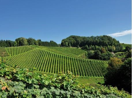 Weingut Masser – Leutschach, Steiermark