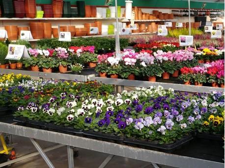 Nimmervoll - Fachmarkt für Blumen & Garten