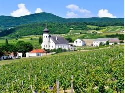 Weingartenhotel im Freigut Thallern